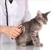 Ветеринарные клиники в Кандалакше